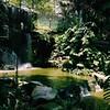 Waterfall Aviary   KL Bird Park   Near Perdana Lake Garden   Kuala Lumpur   Malaysia
