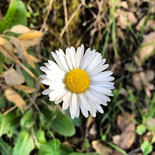 Podrán cortar todas las flores, pero no podrán detener la primavera. ¡Feliz fin de semana! 🌼 #desdelorural