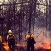 #Firefighters standing watch over a prescribed burn today. #healthyforest #habitat #usforestservice #nwtf