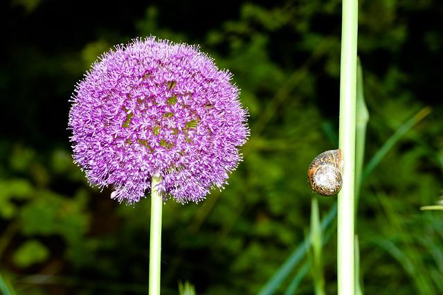 2014:07:10 - Glasgow Botanic Gardens - Sigma 180mm Macro - 032