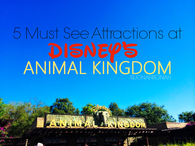 5 MUST SEE ATTRACTIONS AT DISNEYS ANIMAL KINGDOM