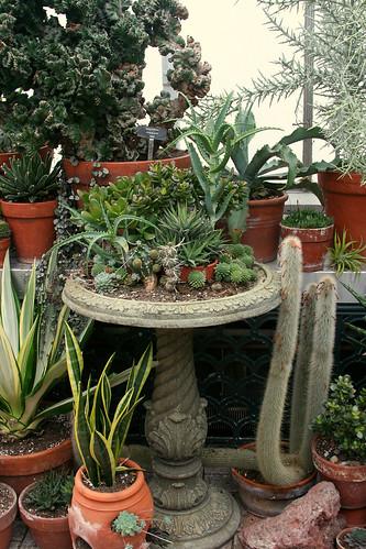39_succulent_birdbath