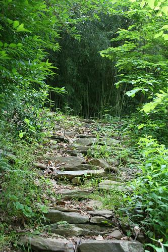 5_bamboo_path