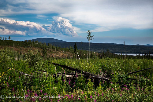 Massive forest fires from mismanaged forests in Northern BC
