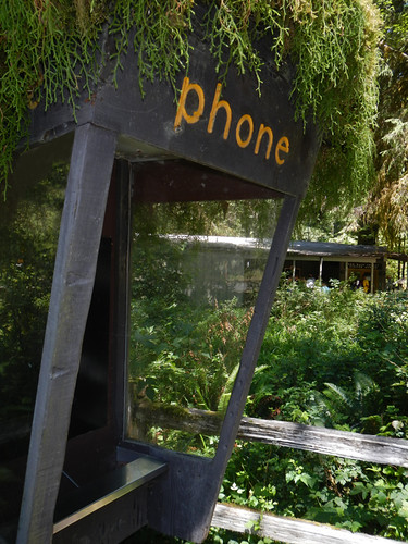Old Phone Booth in the Hoh Rainforest