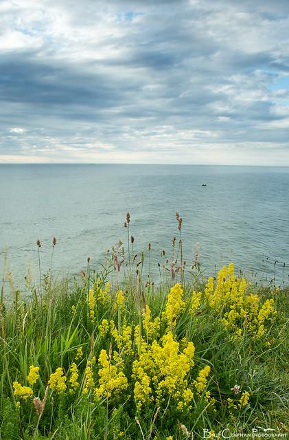 flowers cliff top sea ocean view