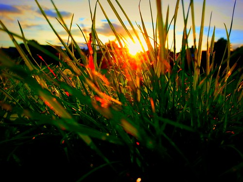 eve sunset summer sunlight green grass evening twilight sundown dusk greenery blade lush grassland dusky turf gloaming endofday longgrass herbaceous sunfall monocotyledons eventide evenfall sunglinting summergloaming