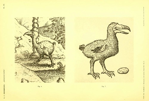 001-Dodo-studiën…1917- Anthonie C. Oudemans- Biodiversity Library