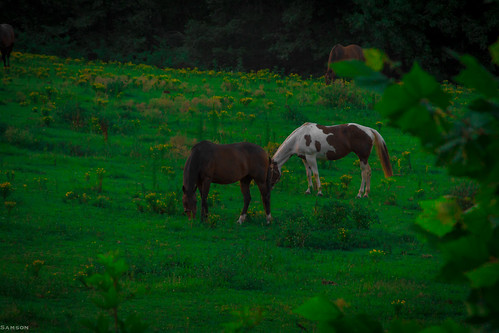 horse green nature grass animal canon landscape eos durham farm 7d land carolina equestrian ef 28135mm equestriancenter canonlens canoneos7d canon7d southernoakequestriancenter