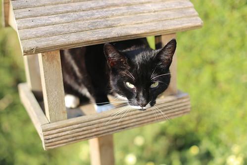 Bird house cat