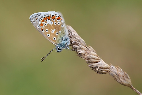 Beautiful Blue.......