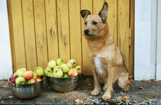 Omenapuilla13