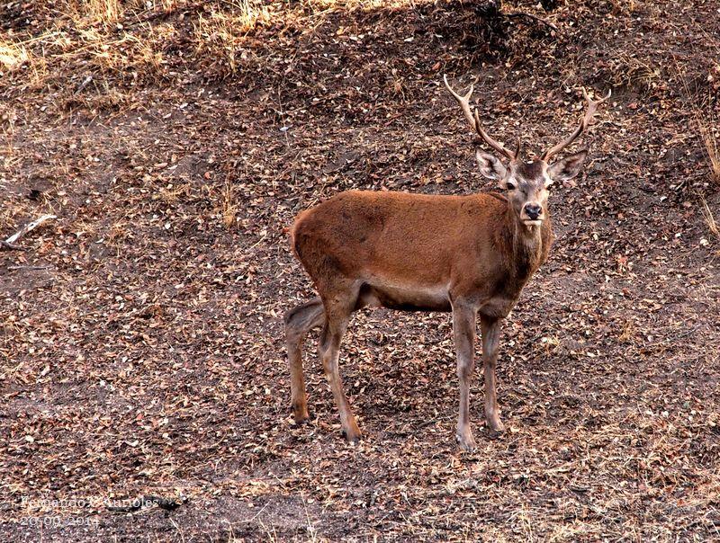 El padre de Bambi 15120215597_8c86145364_c