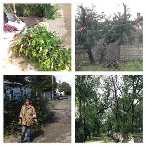 В городе сильных разрушений нет, здания в центре почти все целы, а вот деревья поломало сильно. Крыши лишь надорвало, у одного соседа унесло листы шифера ( они упали на другого соседа) Граждане! Обпиливайте деревья на участках вовремя!  #старыйкрым  #ужос