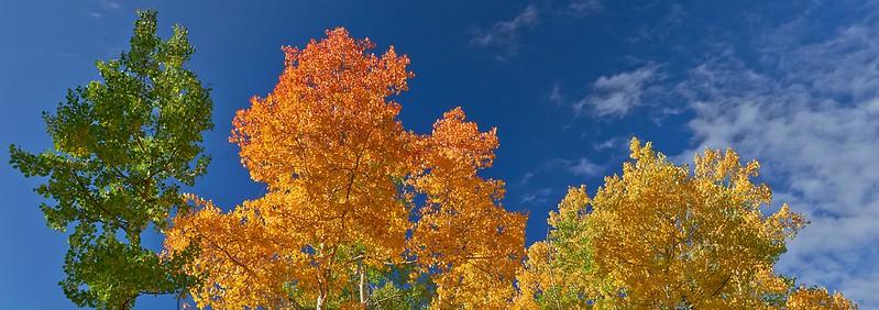 The three colors of fall - Santa Fe