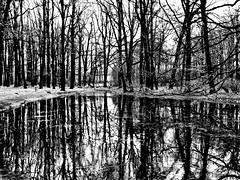 Winter Trees in Black and White - Łódź, Polska (25.12.2011)
