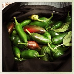 we may have a situation... #peppers #eatyourveggies #preserves see a #canning project ahead
