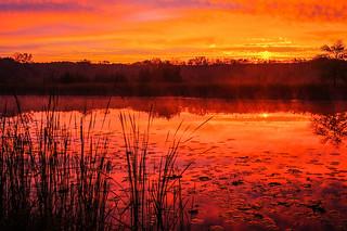 Sunrise at Half Day Forest Preserve, Vernon Hills, Il