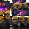 More #MinionMayhem, now they've turned my desk into a conga line!
