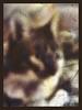 pippo's portrait