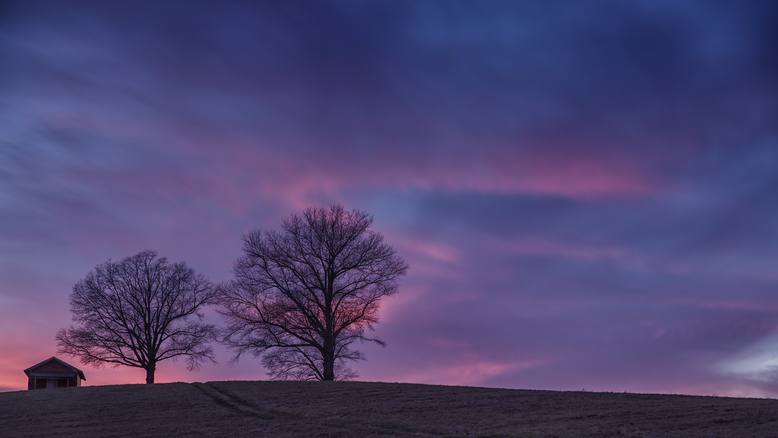 Two Trees at Sunset, RICOH PENTAX K-1, HD PENTAX-D FA 24-70mm F2.8ED SDM WR