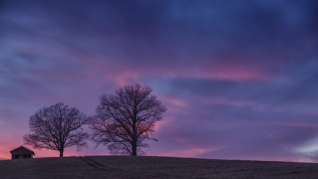 Two Trees at Sunset, RICOH PENTAX K-1, HD PENTAX-D FA 24-70mm F2.8ED SDM WR