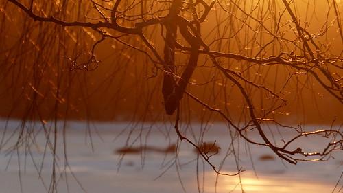 2017 201703 20170305 balticsea drumsö fin finland fz200 geo:lat=6015465010 geo:lon=2487357795 geotagged goldenhour helsingfors helsinki hevosenkenkälahti hästskoviken lauttasaari march nyland salix sea seashore sunset tree twig uusimaa willow winter
