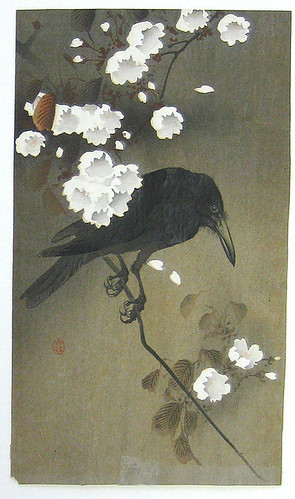 013-Cuervo en un cerezo-via scriptum