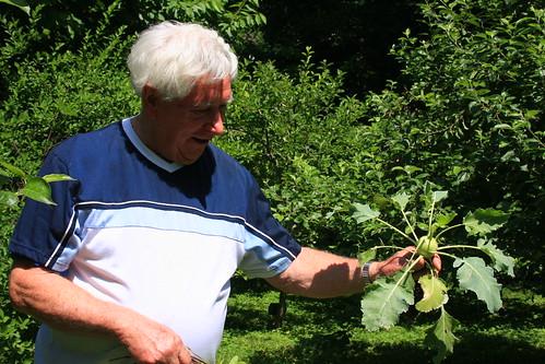 Fritsch Garden Kohlrabi