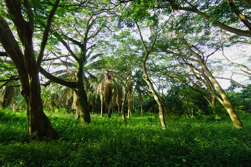 africa trees west green public leaves june gardens forest botanical path walk tokina ghana greater canopy 11mm legon accra 2014 paulinuk99999