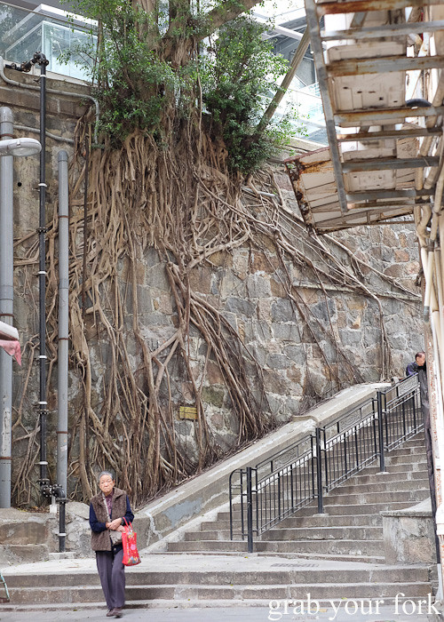 Stone wall tree in the Central District, Hong Kong