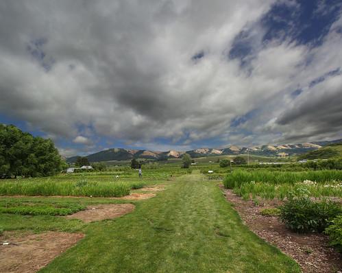oregon farm fields hoodriver thegorgewhitehouse