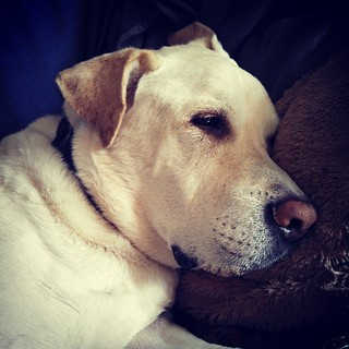 Lazy Saturday morning... #dogstagram #instadog #love #seniordog #lounge #mybaby