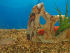 sarasota-fish-tanks-design-install-maintain-florida-1
