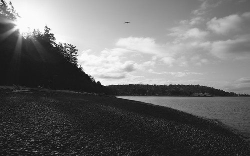 seattle blackandwhite sun water canon flying washington shore pacificnorthwest canonef2470mmf28lusm lincolnpark canoneos5dmarkiii