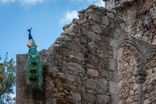 urban portugal wall garden nikon arch wildlife peacock palace evora sawtooth d3000