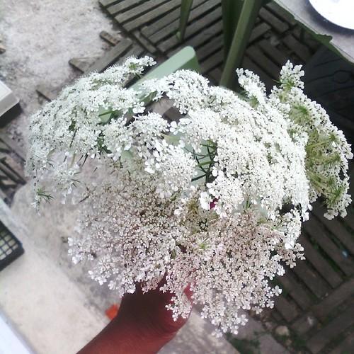 Je suis celle qui fleuri sa maison à peine rentrer. #maisonfleurie #flower #nofiltre
