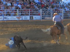 animal sports, rodeo, cattle-like mammal, western riding, bull, event, equestrian sport, sports, charreada,
