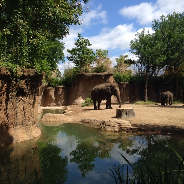 The elephants were an amazing site today at the zoo, I love reflection photos and had to share this gem. #latergram