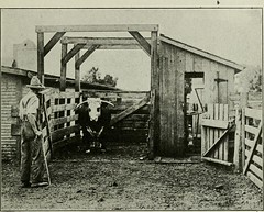 "Image from page 862 of ""Successful farming : a ready reference on all phases of agriculture for farmers of the United States and Canada"" (1916)"