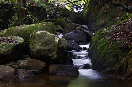 longexposure trip winter vacation fall rain forest river waterfall nationalpark rainforest stream long exposure deep reserve unesco sri lanka tropical srilanka ceylon sinharaja forestreserve sinharajaforestreserve