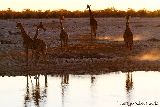 Evening meeting at the waterhole - Etosha N.P., Namibia