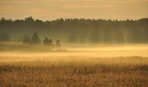 fog finland pori