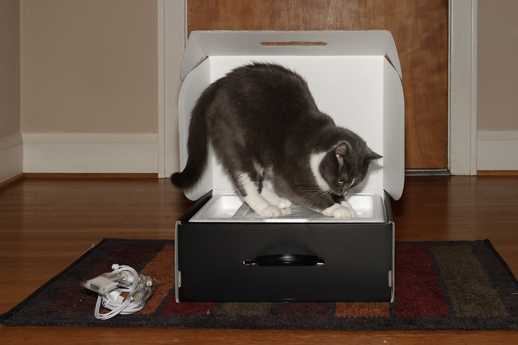 Our cat Templeton inspecting the box of my 15 inch Powerbook shortly after it was delivered