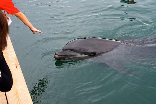 イルカさんとふれあう