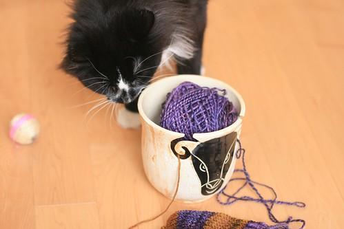 Handspun w cat