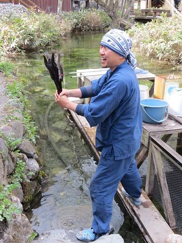 Catching iwana