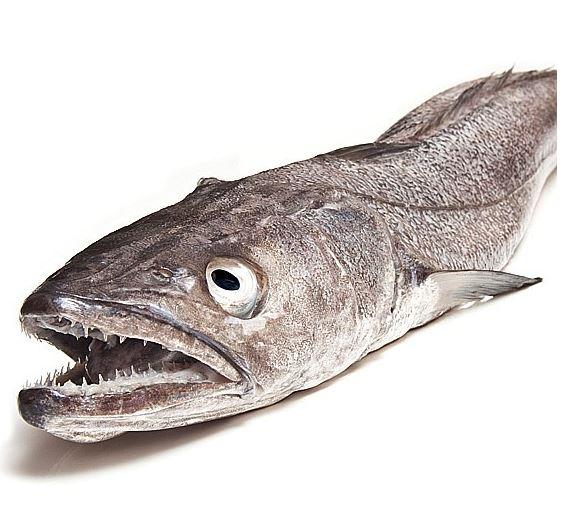 Resultado de imagen de imagen de la merluza