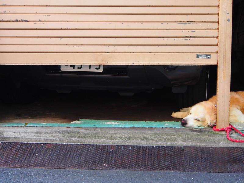 When I walked around Asakusa: Afternoon Nap