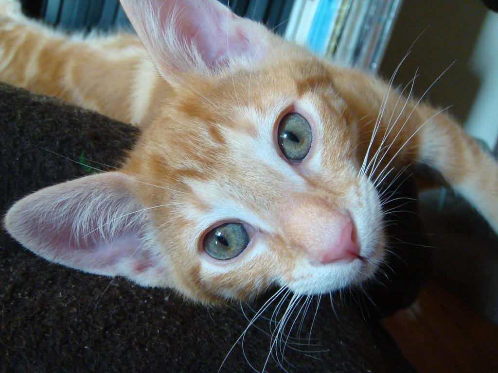 foster kitten Mouse